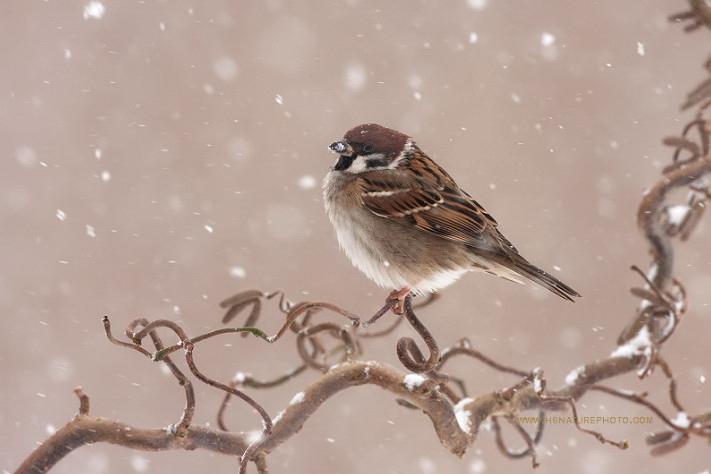 Воробей на снегу книга скачать