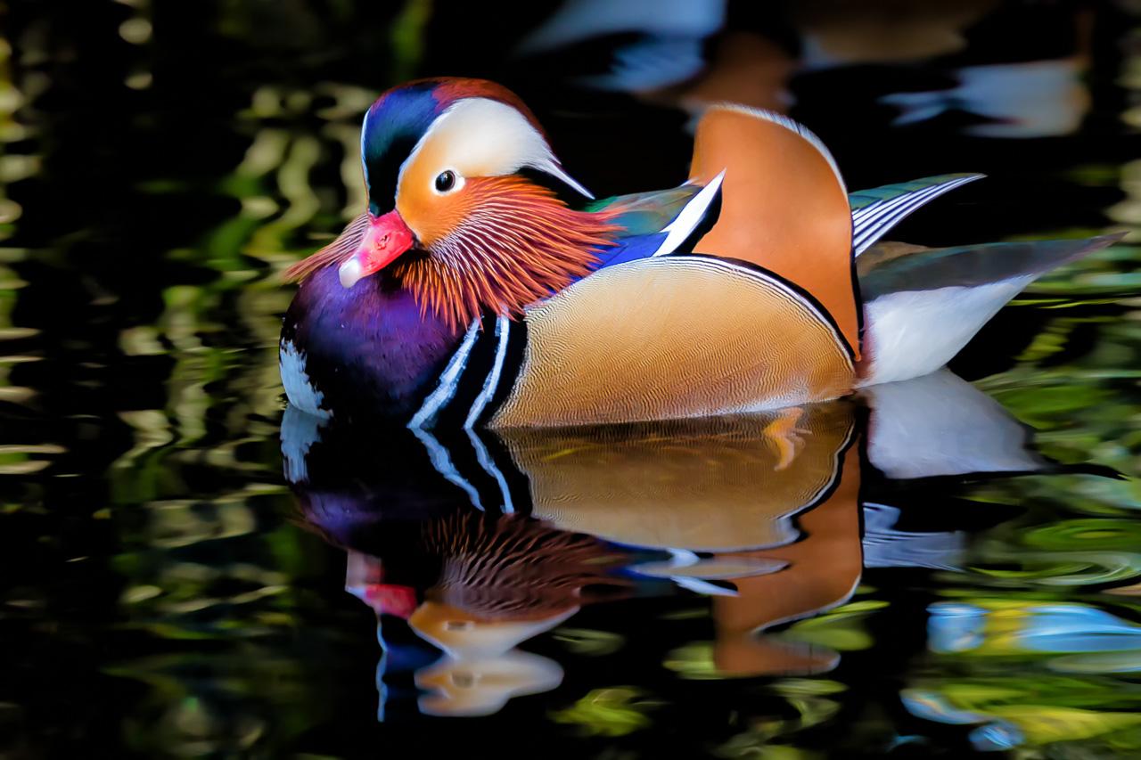 Картинки красивые и редкие птицы