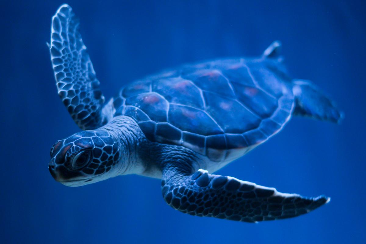 Тебе дня, картинки с черепахами