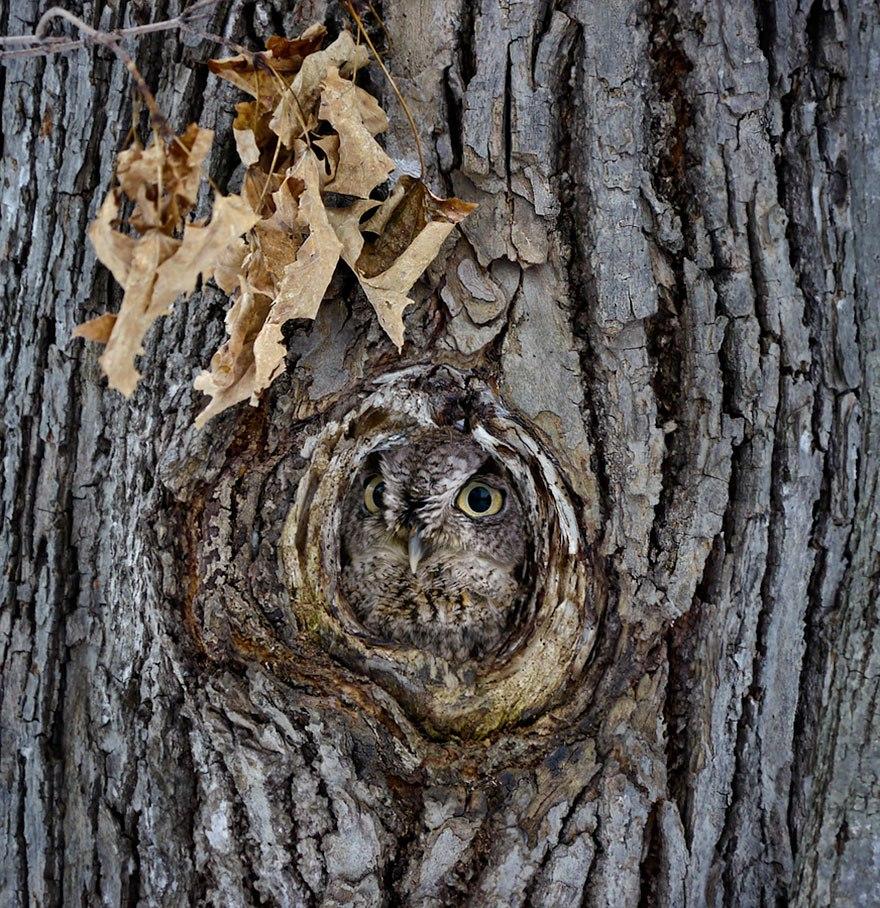 Камуфляж от сов фото