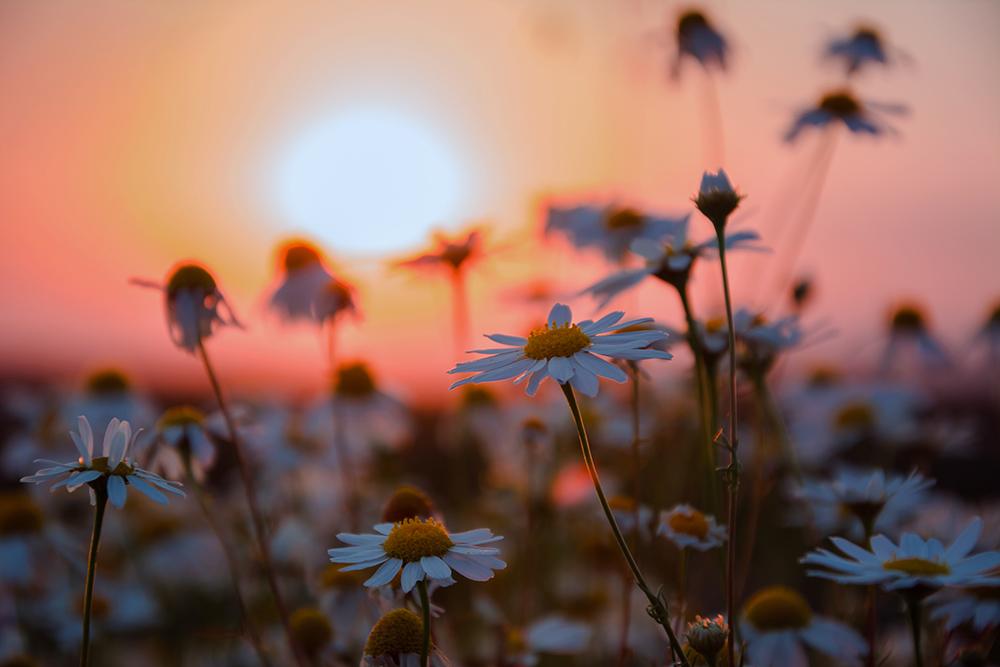 одинокий цветочек на закате скачать