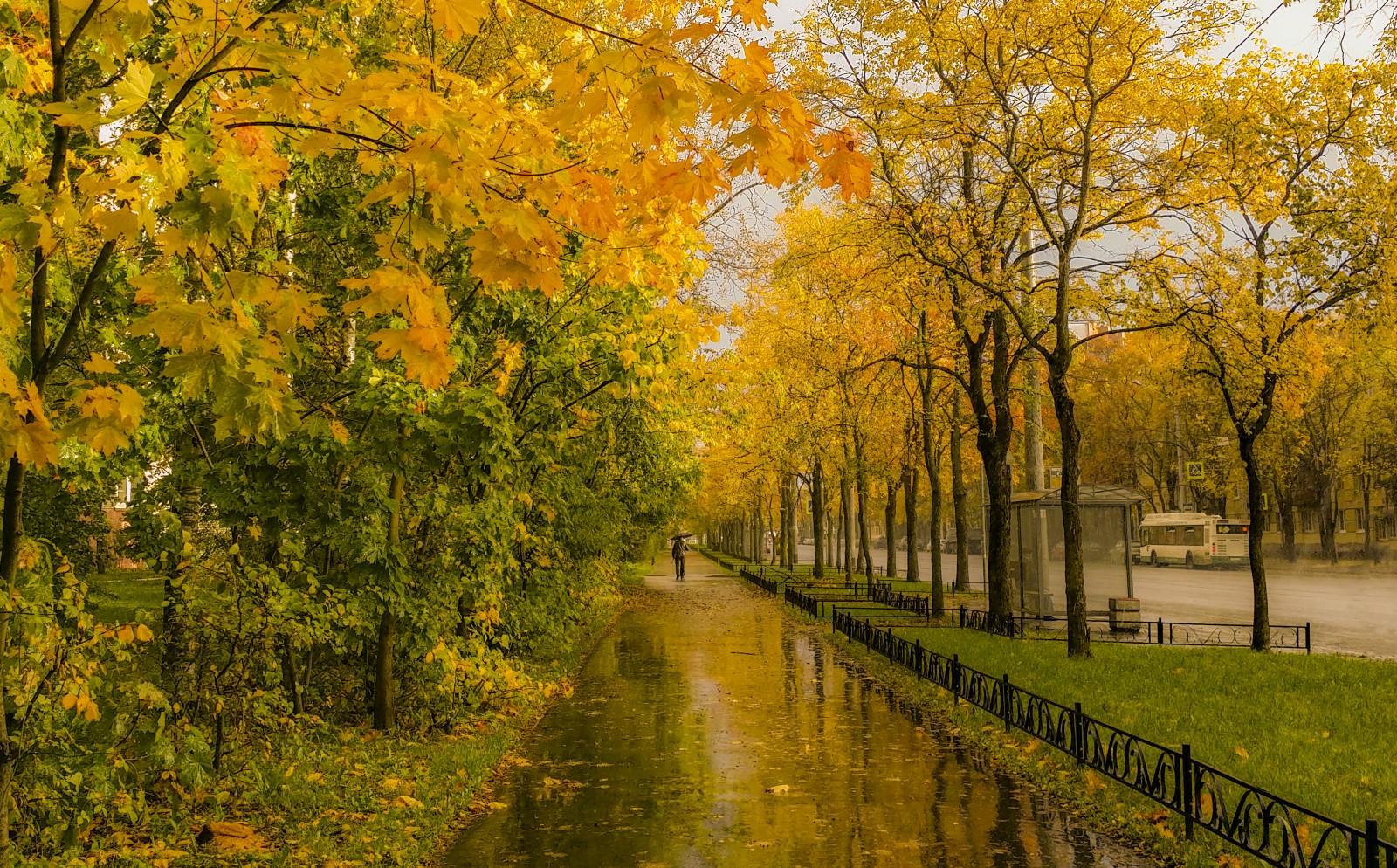 Осень дождь фото красивые, картинка животные картинки