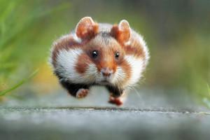 фотки про животных.