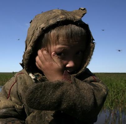 Ямал. Климат и оленеводство. Фото Ямала - животный мир.