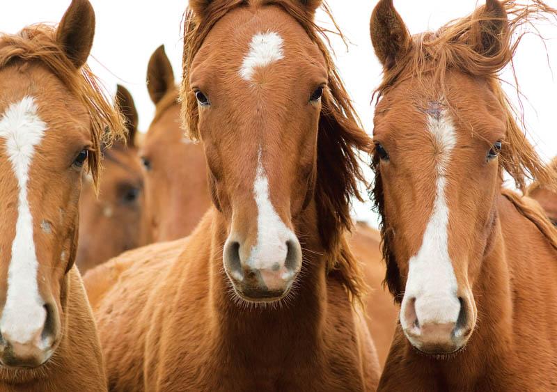 Лошади похожи на людей