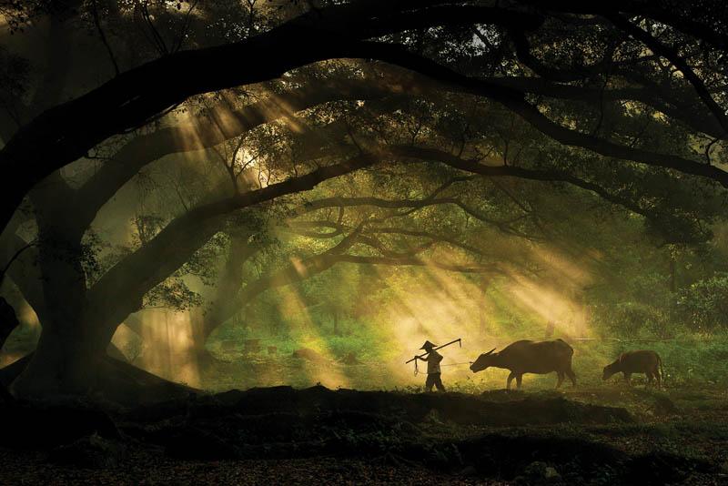 © James Chong courtesy Sony World Photography Awards 2011