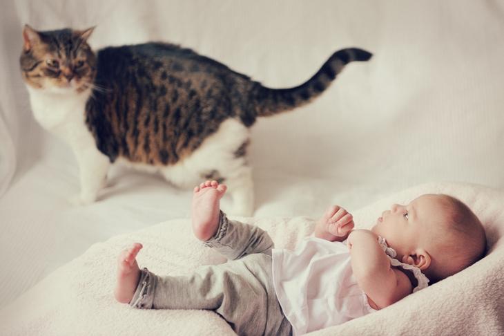 Котик и малыш