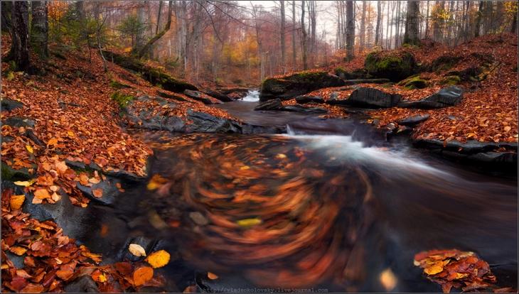 Ручей осенью