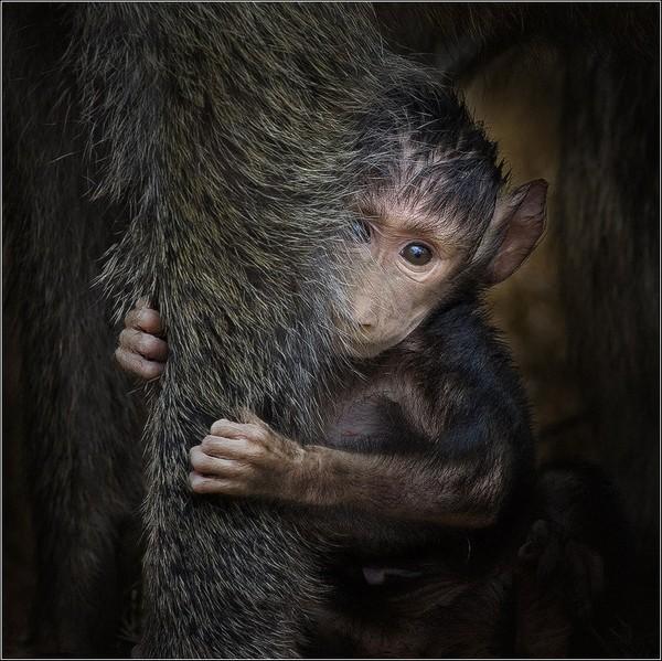 фотограф анималисты, фотограф животных, фото животных