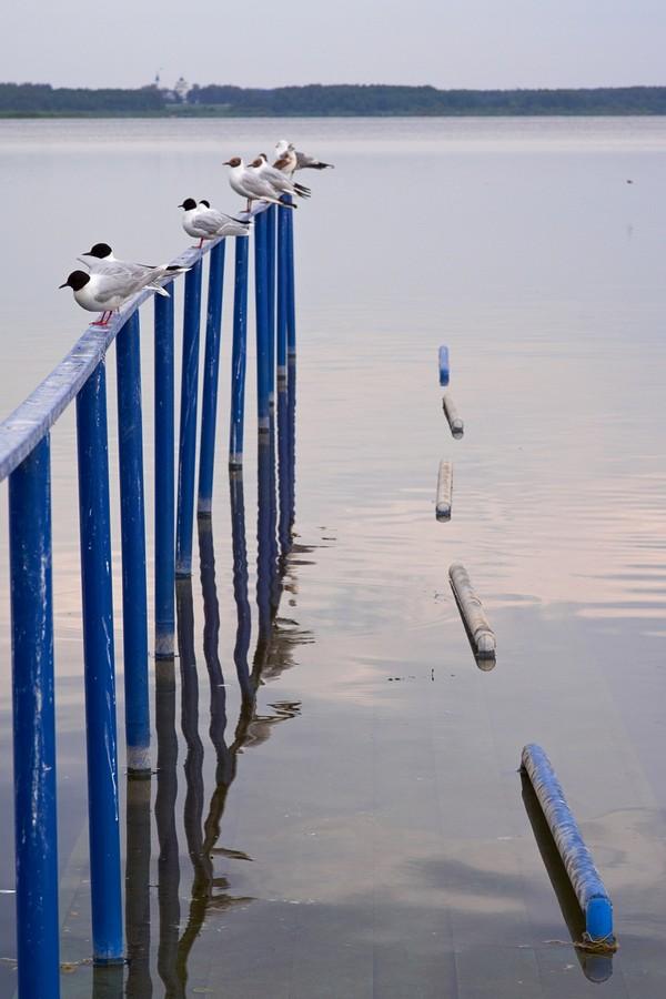Фото, снятое объективом Samyang 85 mm f/1.4 AS IF