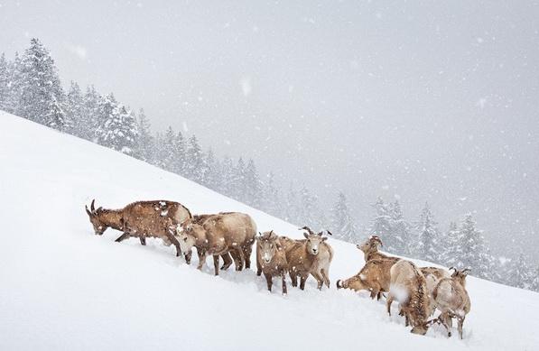 BBC WildLife Photographer of the Year, фотограф года, Владимир Медведев