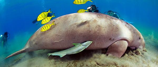 дмитрий мирошников, фото подводного мира, фото подводный мир, подводные фото, фото под водой