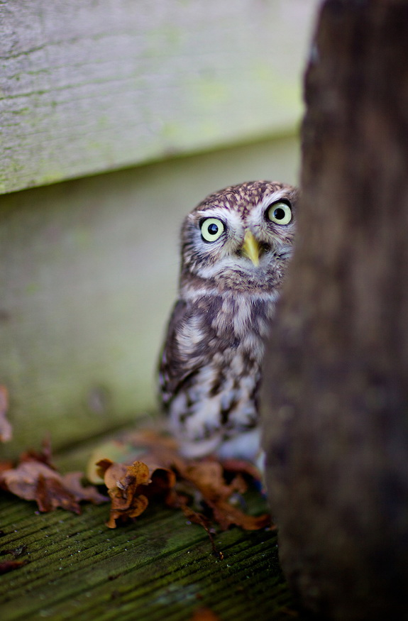 Марк Бриджер, природа фото, красивые фото природы, фото красиво природа