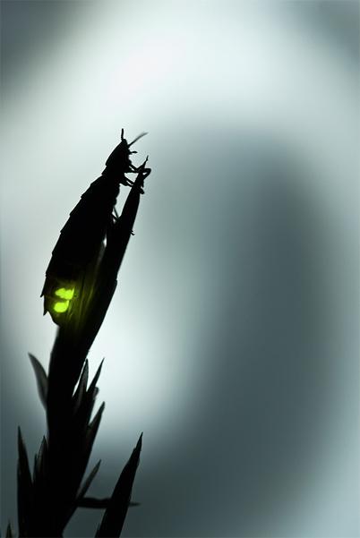 Дикая природа России - 2012, фотоконкурс дикая природа россии 2012, выставка, победители