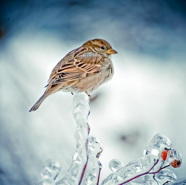 Зимняя природа, птицы зимой