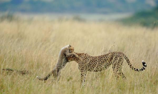 National Geographic Photo Contest 2012,  national geographic конкурс, победители