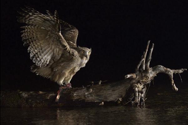 конкурс Золотая черепаха, лучшие фотографии, фото дикой природы