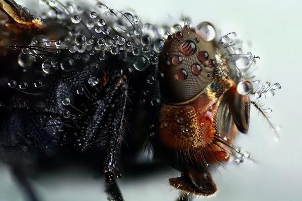 караелин бэн, макро, макрофотосъемка, макрофотография