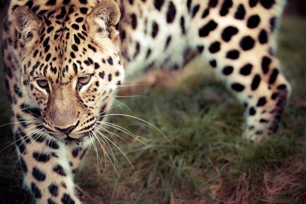 фото животных, лучшие фото животных, январь 2013