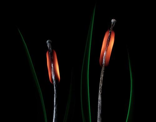 фотопроект, Станислав Аристов, фотограф, фото спичек, спички фото, фото горящей спички