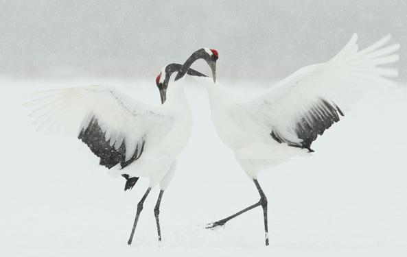 Мартин Байлей, фотограф, природа японии фото, пейзажная фотография