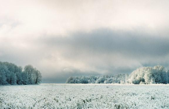 Лесные истории Зима, фотовыставка на Патриарших прудах, зимний лес фото,  арт-проект «ЛЕС»