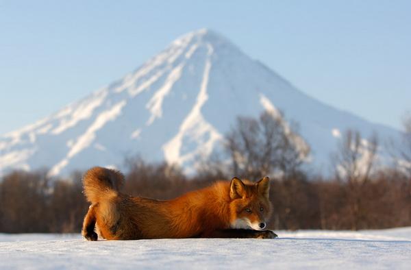 Игорь Шпиленок, фотограф, фотографии, фото природы, фото животных