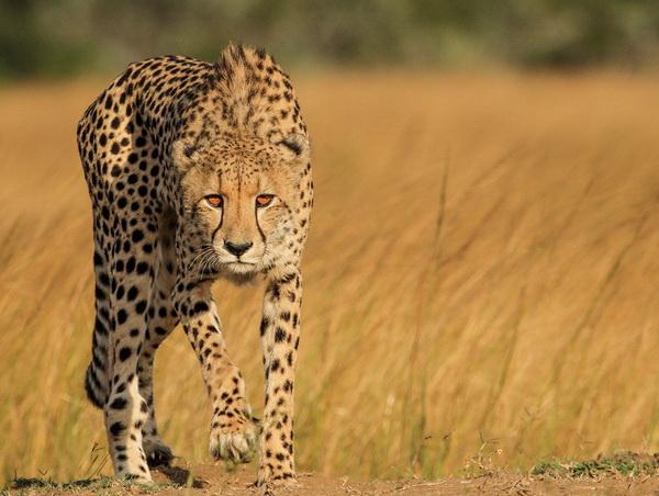 фото животных, красивые фото животных, лучшие фото животных, бесплатные фото животных,