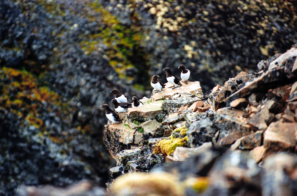 земля франца иосифа фото, архипелаг земля франца иосифа, фотографии