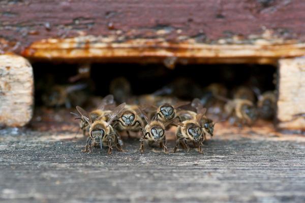 Макросъёмка насекомых, советы Макросъёмки, фото носекомых