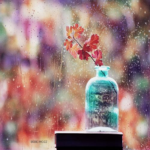 Осенний натюрморт. Фото: Bebe Mozz