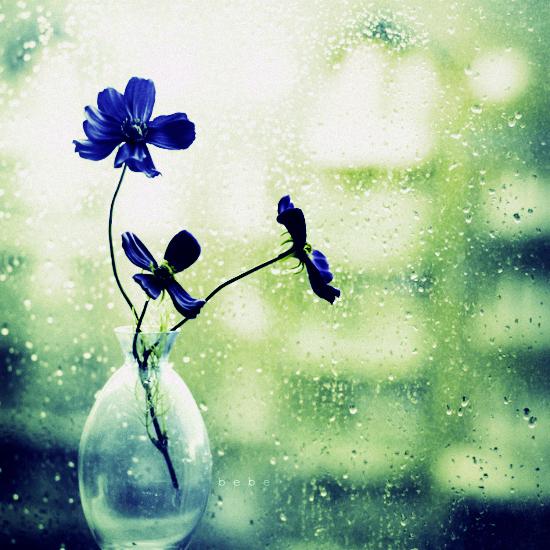 Синие цветы у окна. Фото: Bebe Mozz