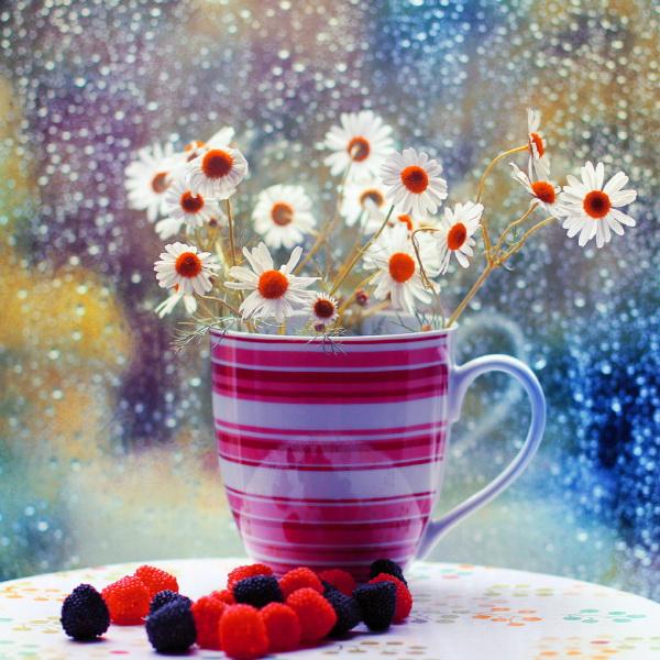 Ромашки в чашке. Фото: Bebe Mozz