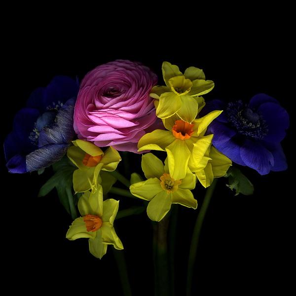 Магды Индиго, фотограф, фото, фото цветов, цветы, букеты, нарциссы, розы