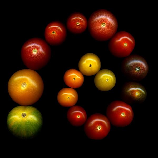 Магды Индиго, фотограф, фото, фото цветов, помидоры