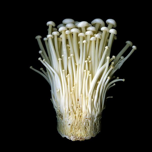 Магды Индиго, фотограф, фото, фото цветов, грибы