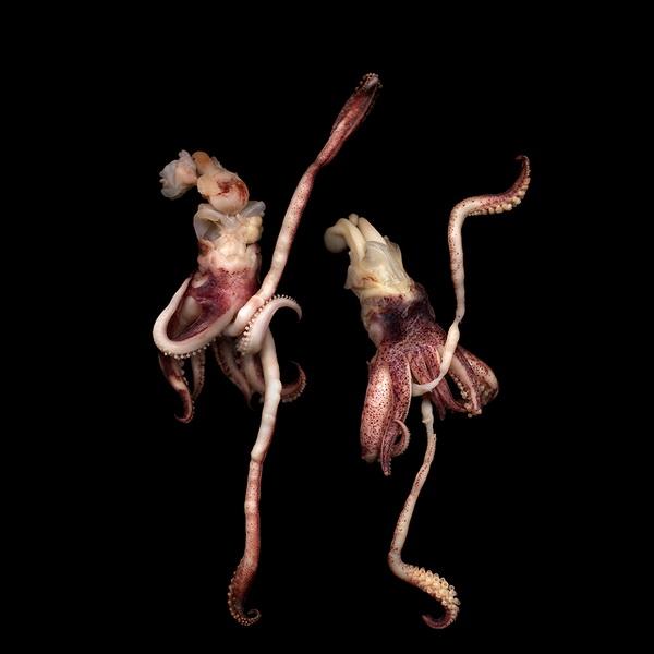Магды Индиго, фотограф, фото, фото цветов, осьминоги