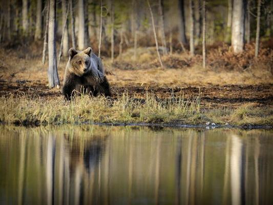медведь, весна, природа, Кристиан Патрик Риччи, фотограф, фото, пейзажная фотография, travel-фотография