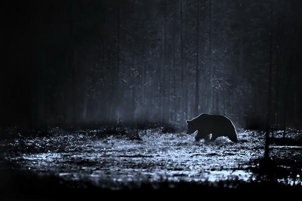 Кристиан Патрик Риччи, фотограф, фото, пейзажная фотография, travel-фотография, медведь, животные