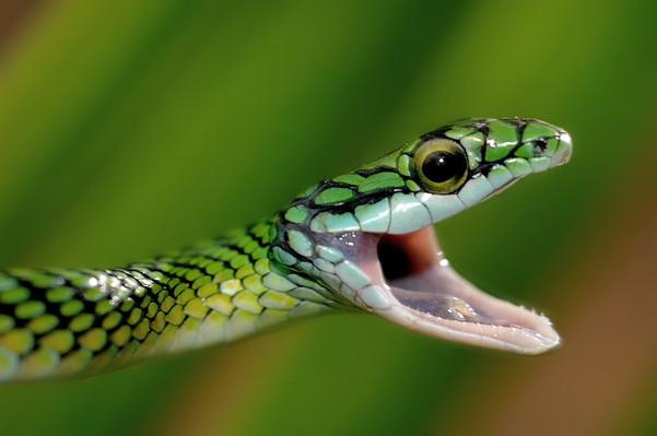 змея, животные, рептилии, Кристиан Патрик Риччи, фотограф, фото, пейзажная фотография, travel-фотография