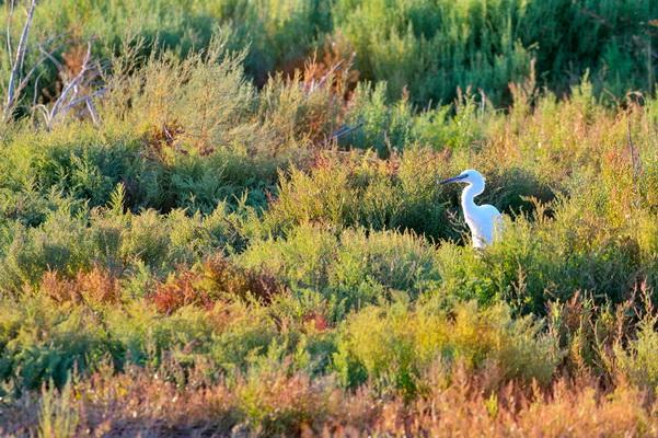 аист, природа, пейзаж, Кристиан Патрик Риччи, фотограф, фото, пейзажная фотография, travel-фотография