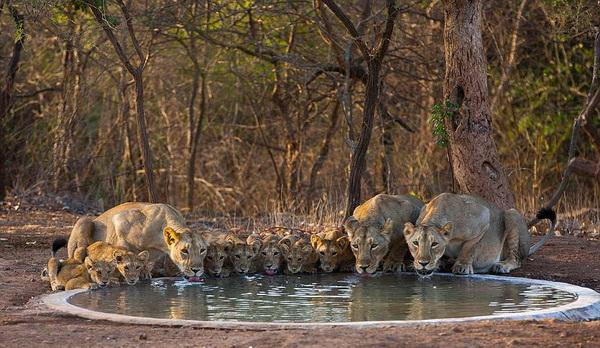 Ури Гольман, фотограф дикой природы, фото природы, фотографии