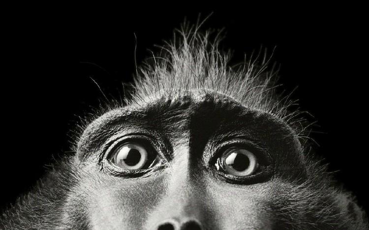 Тим Флак, рекламная фотосьемка, британский фотограф