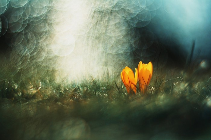 Апрель 2013, 20 лучших фотографий природы, красивые фото природы, лучшие фото природы