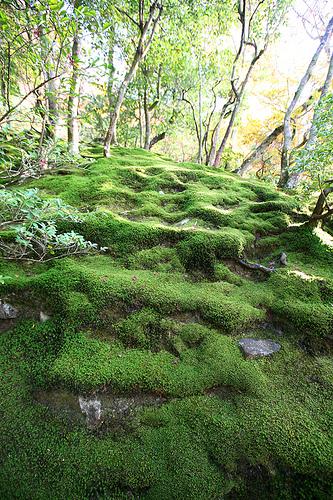 Дмитрий Терновский, путешествие в Японию, фото японии