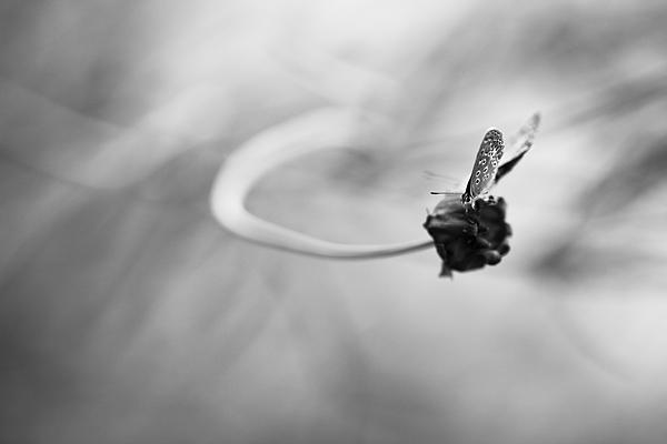 Фотограф Гульфия Мухаматдинова, фото