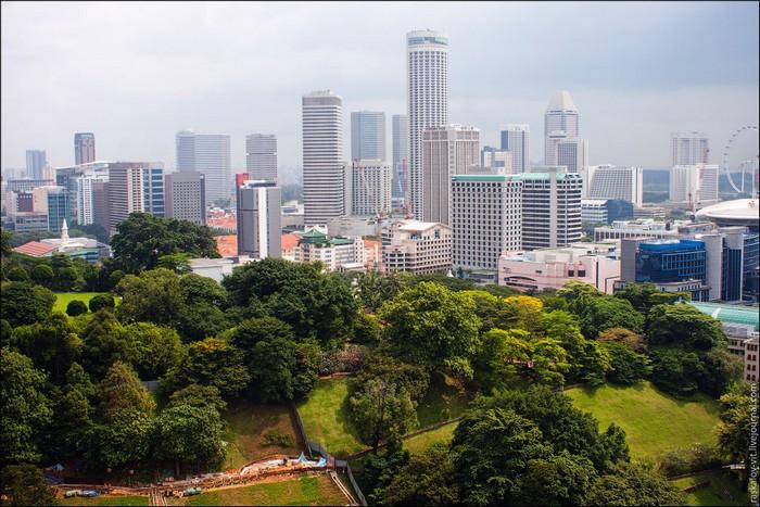 Зелень в Сингапуре. Фото: Виталий Раскалов