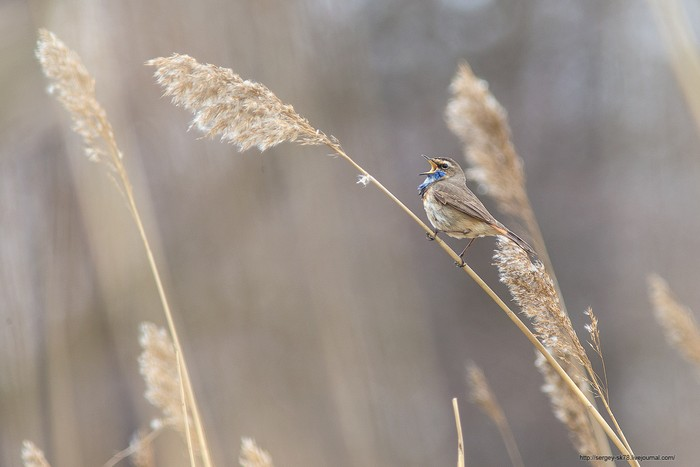 Сергей Клочев, фотограф Сергей Клочев, фото дикой природы