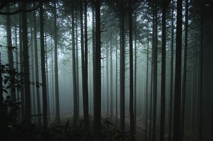 фото природы, красивые фото природы, фото живой природы