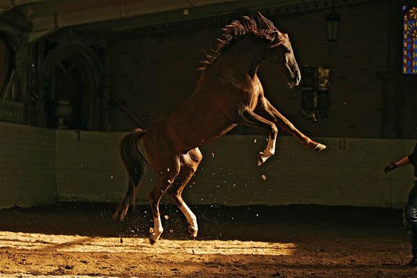Лидия Невзорова - профессиональный фотограф. Ее работы впечатляют. Здесь представлены некоторые ее работы - фотографии лошадей, в которых мастер передала величие и красоту этих животных.
